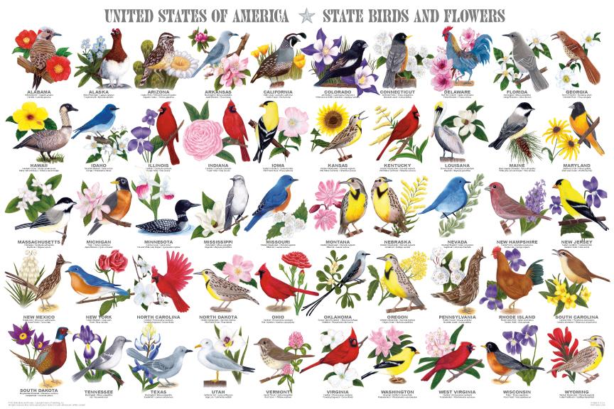 Avian Raptors Poster The Birds Of Prey Hawk Eagle Buzzard Falcon And More