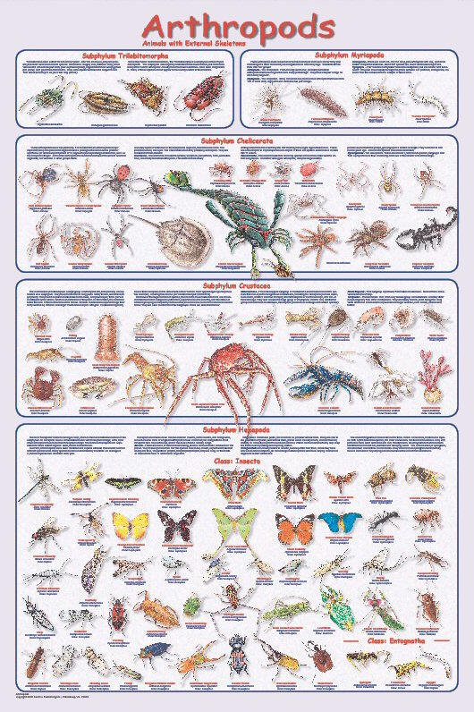 to as   insects   and ...