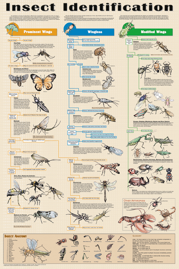 Insect_identificationi on Arthropods Worksheet