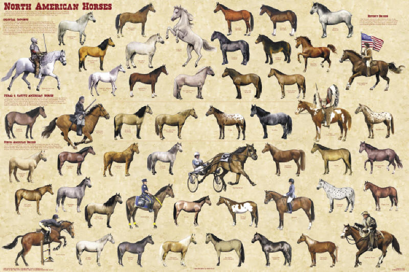 horses around the world poster horse posters pictures prints the horse 800x533