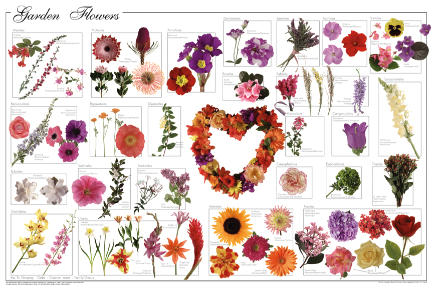 This Poster Shows 30 Of Most Prolific North American Wildflowers. These Are  The Ones That You Are Likely To Encounter In Your Everyday Travels.