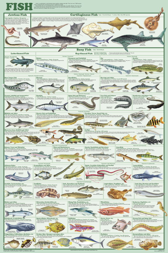 Marine life posters sea life posters pictures prints for Are fish mammals