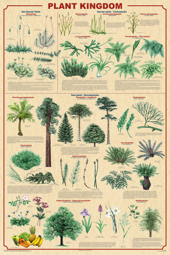 What is the classification of plants?